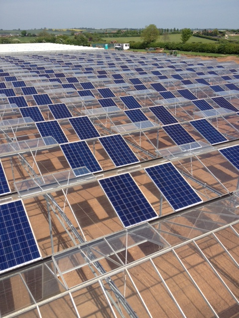 What Are the Benefits of Solar PV for Horticulture?